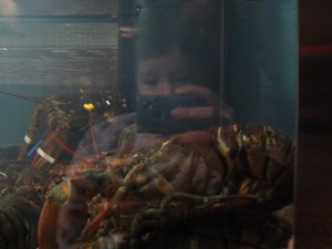 nathan more interested in the camera than the DELICIOUSNESS ON THE OTHER SIDE OF THE GLASS