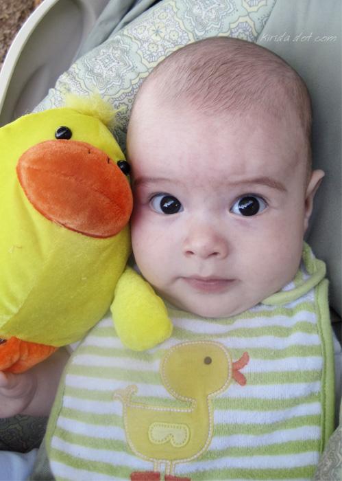 duck duck baby