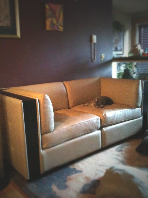 cat on a hot tin couch
